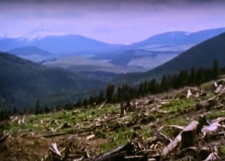 "A clearcut in Gitksan territory, from the film ""Blockade,"" by Nettie Wild."