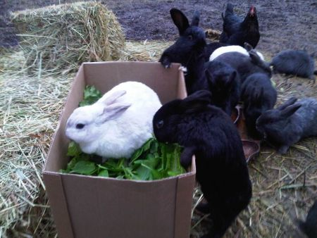 EARS rabbits self-serve salad box