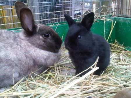 EARS rescue rabbits