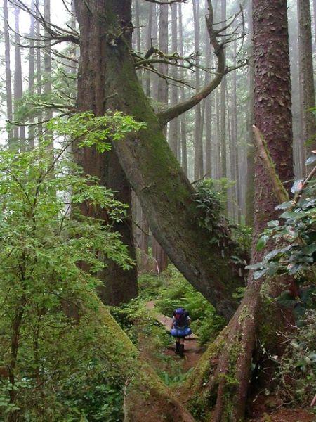 Hiker on the Juan de Fuca trail