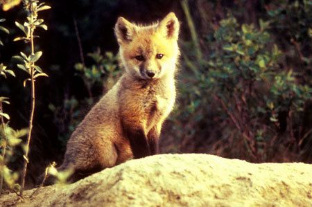 fur is for animals, not rich idiots