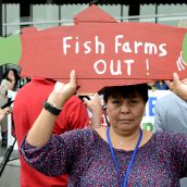 Fish farm foes demand province-wide shutdown