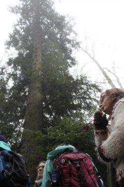 Pondering the camoflauge of the hemlock under a great cedar