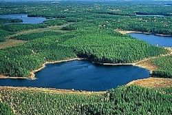 Greenpeace claims the CBFA will save an area of the Boreal Forest twice the size of Germany