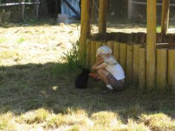 young volunteer feeds rabbit