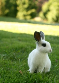 young rabbit at risk