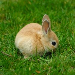 BC Supreme Court Grants Injunction to Protect UVic Rabbits July 30 2010